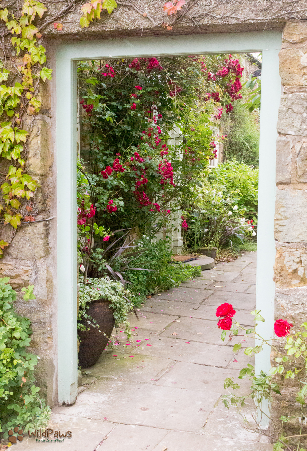 Rose Garden: Ox Pasture Hall Country Hotel in North Yorkshire