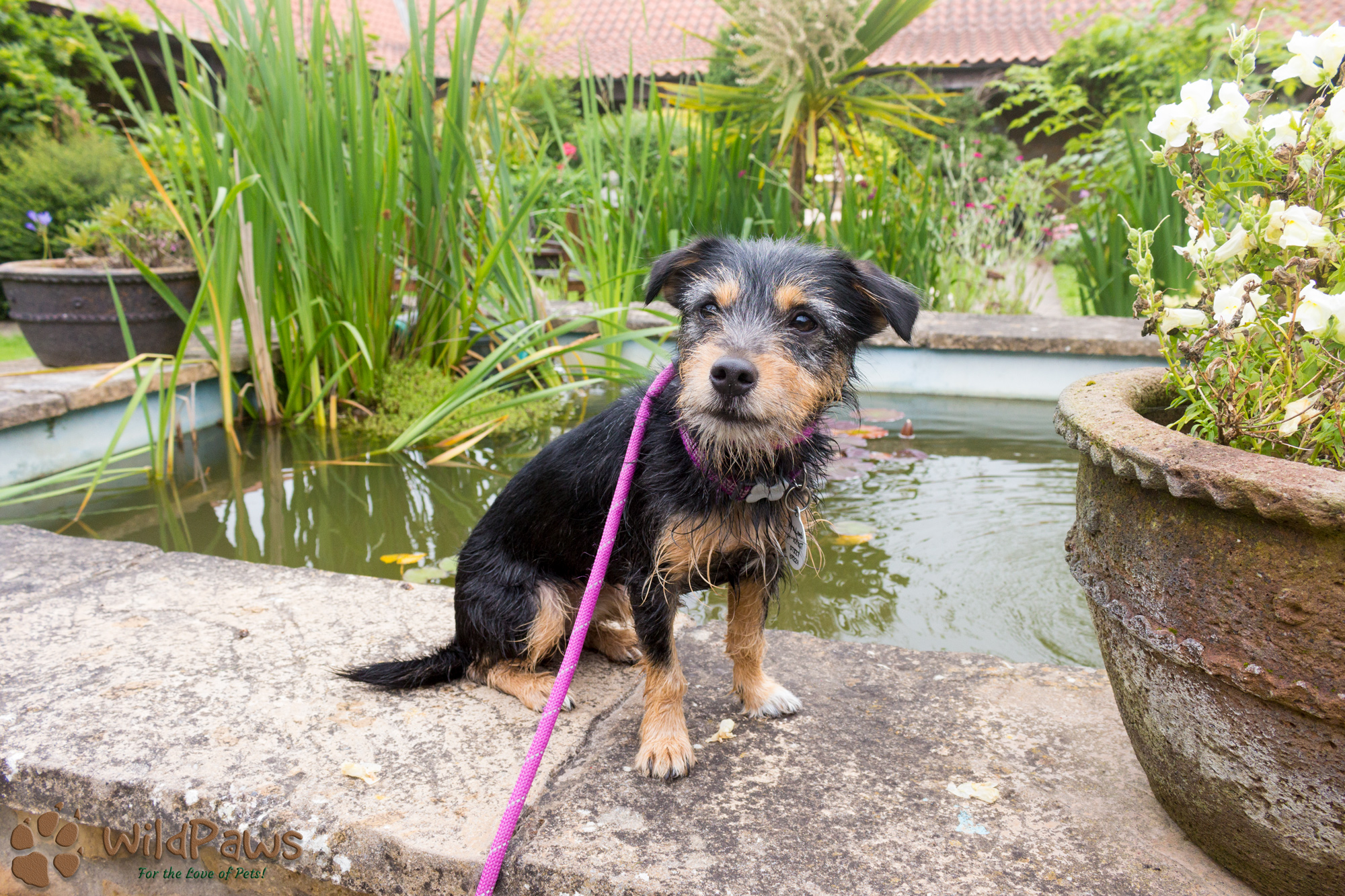 Paisley WildPaws Online Pet Shop Ambassador at Ox Pasture Hall Hotel Pond