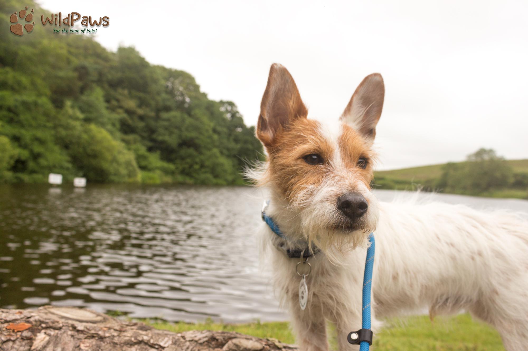 Wilbur WildPaws Online Pet Shop Ambassador at a Lake