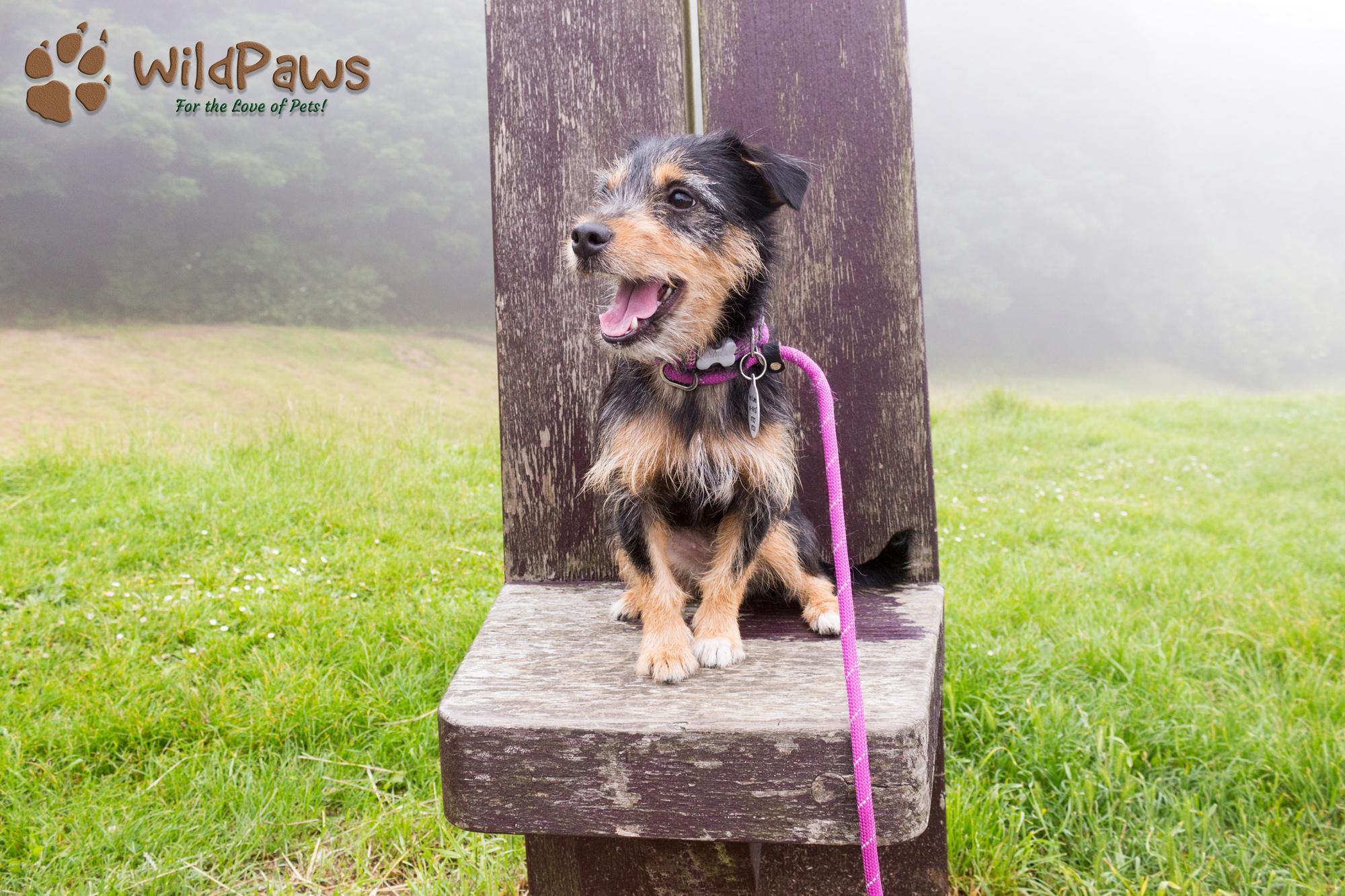 Paisley WildPaws Online Pet Shop Ambassador at Scarborough Castle