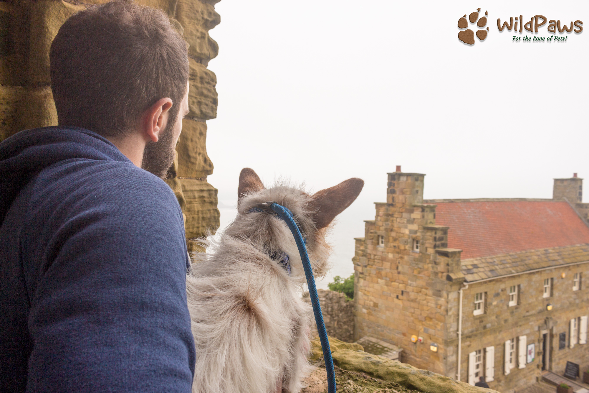 Wilbur and Mr WildPaws Exploring Scarborough Castle