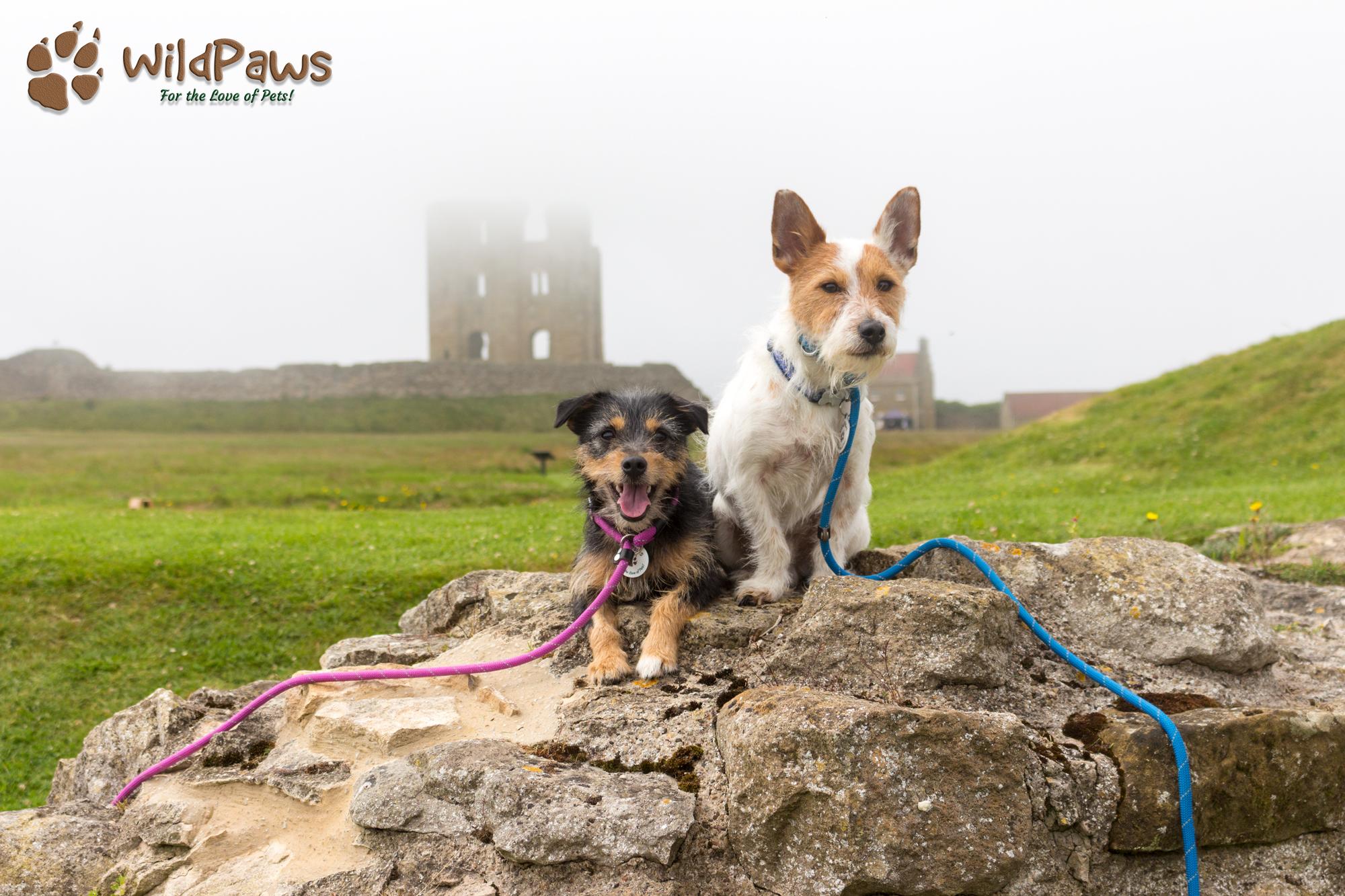 Wilbur & Paisley WildPaws Pet Shop Ambassadors at Scarborough Castle