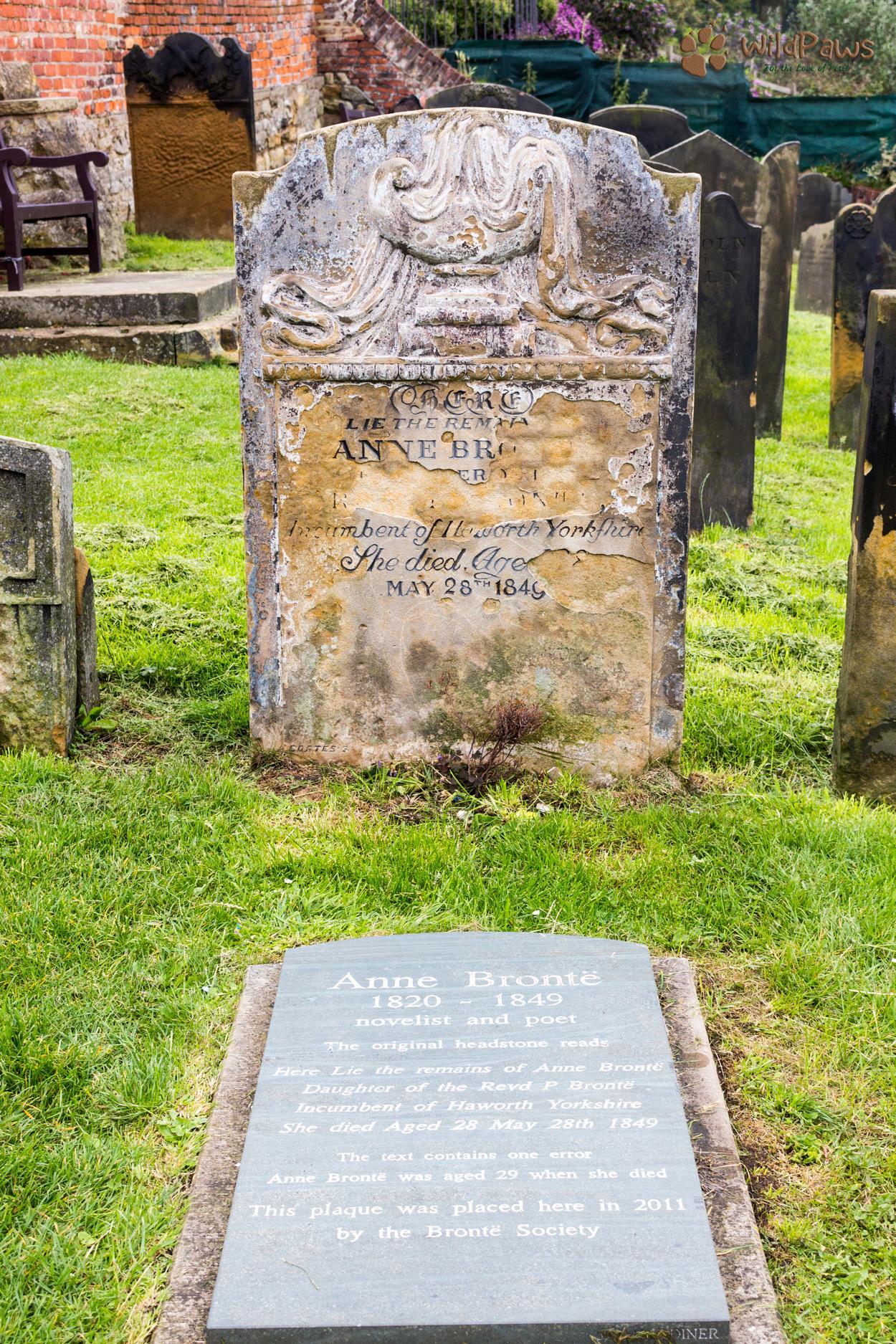 WildPaws Pet Shop Visit Anne Bronte's Grave