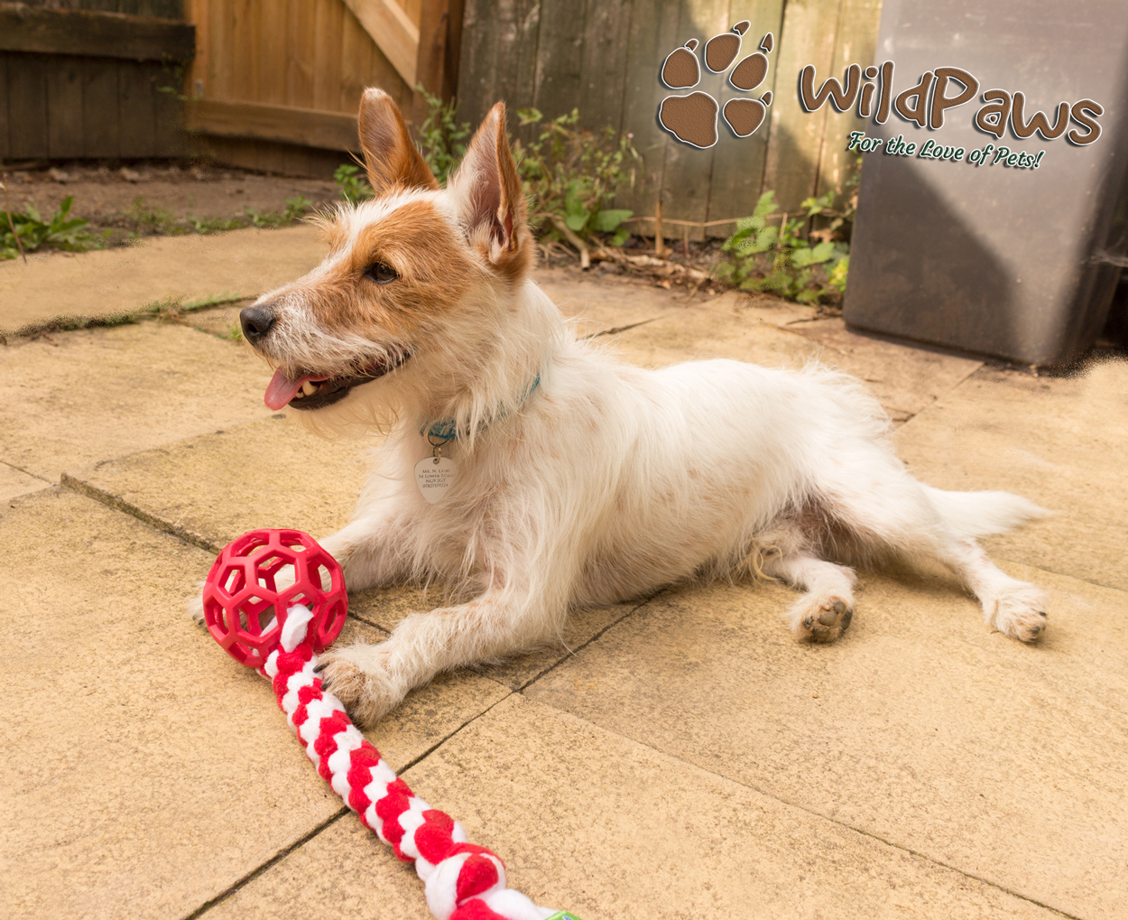 Wilbur & Ruffle Snuffle Tug'n'Treat Toy for WildPaws Online Pet Shop Blog