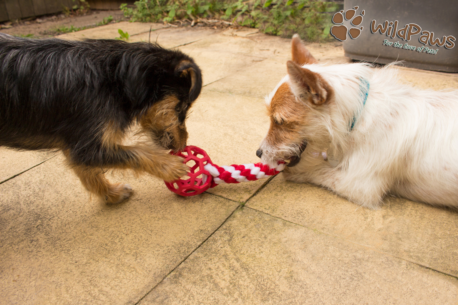 Wilbur & Paisley Online Pet Shop Blog Review for Ruffle Snuffle
