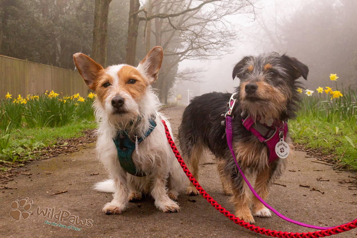 Wilbur & Paisley of WildPaws at New Home Town in Sevenoaks Kent