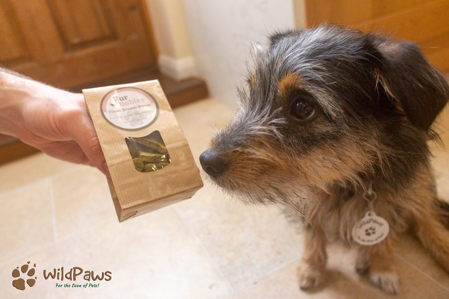 Paisley and Fur Babies Biscuits for WildPaws Blog Review