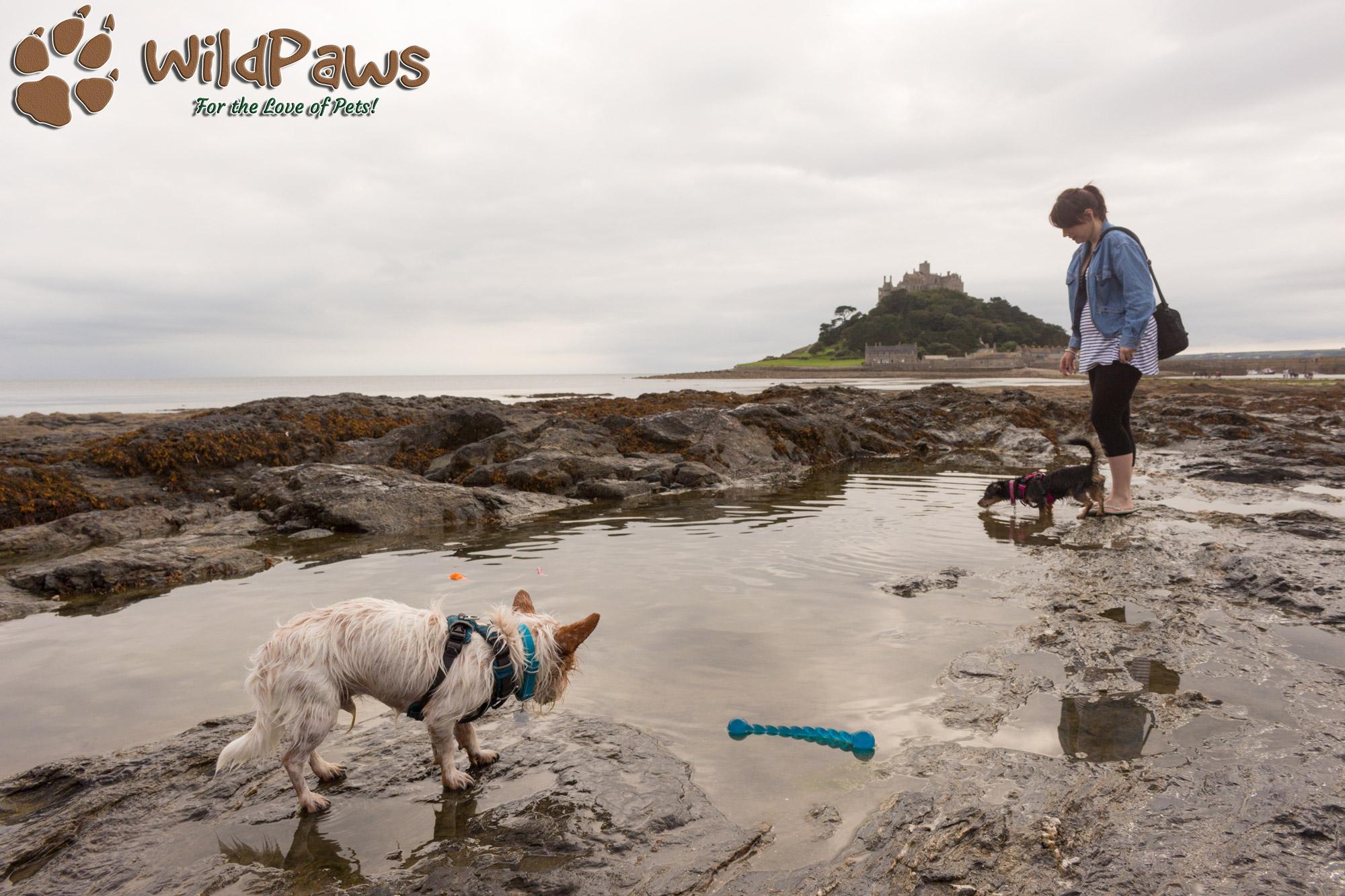 Wilbur & Paisley at St Michael's Mount