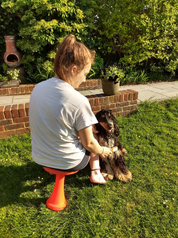 OneLeg Dog Grooming Stool
