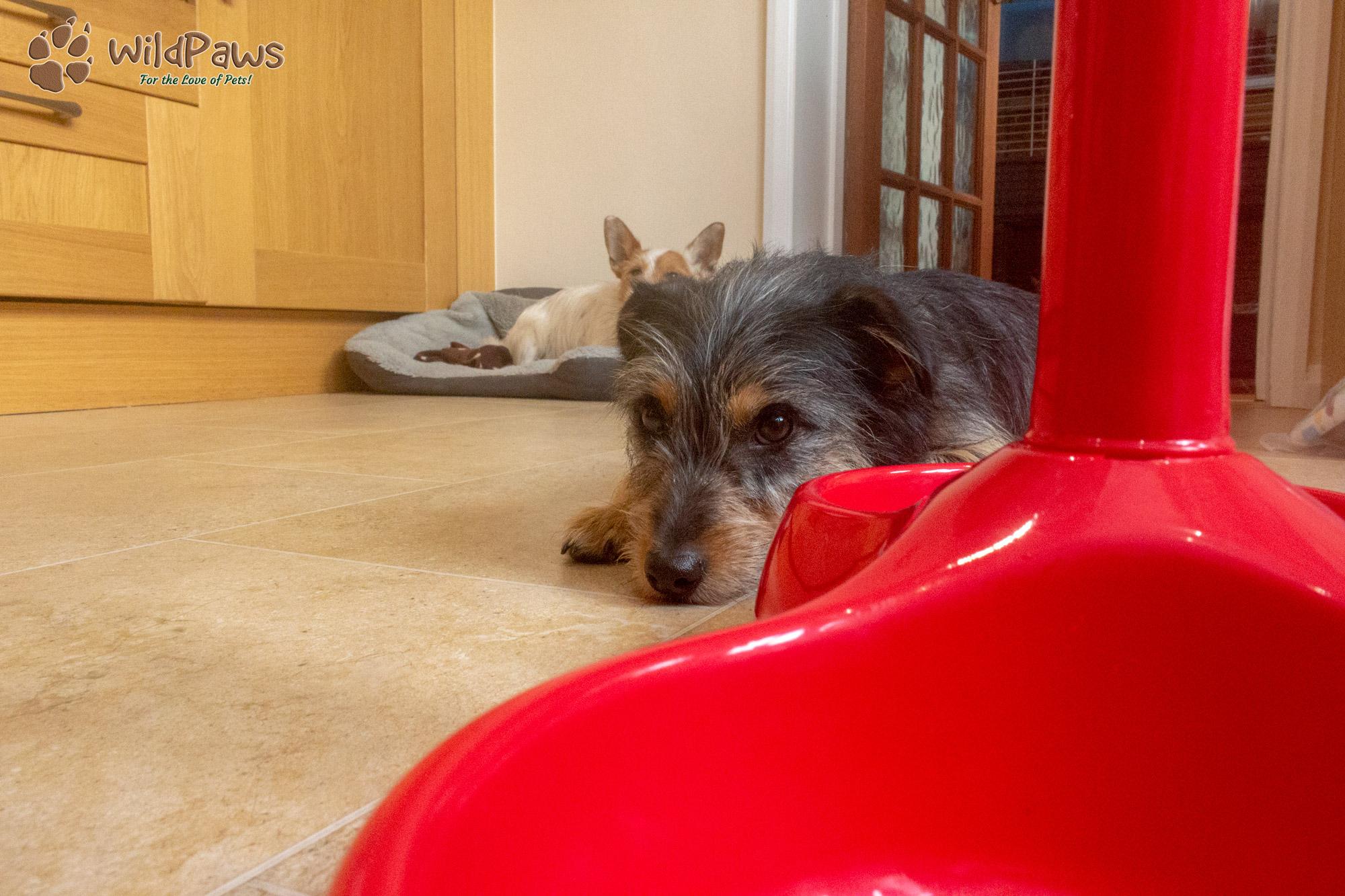 Paisley and Wilbur Waiting