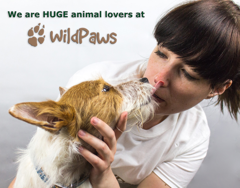 Wilbur and Ms WildPaws: Online Pet Shop