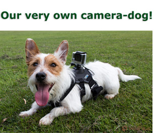 Wilbur: Our Camera Dog! WildPaws Online Pet Shop.